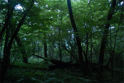ある日の夜、天狗高原近くの森 ...