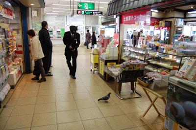 高知駅の鳩